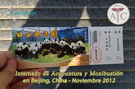 visita del grupo al zoologico de beijing durante los fines de semana del internado de acupuntura en China